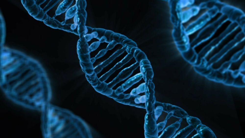 Genetyka otyłości-Fundacja Zobacz Jestem